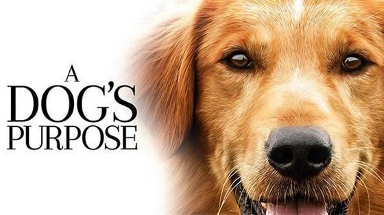 essay on dog